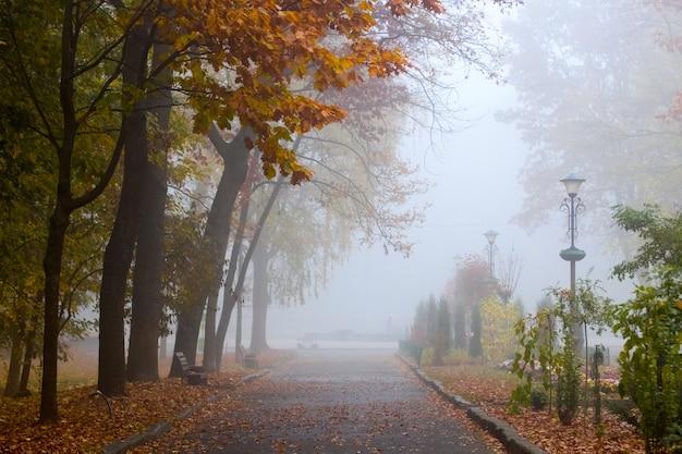 나무에 화려한 단풍과 마른 잎으로 덮여 골목 가을 공원