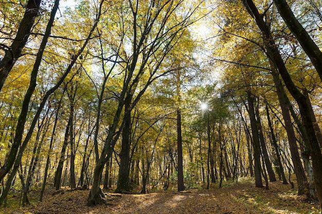 Осенний парк с опавшими листьями в солнечную погоду
