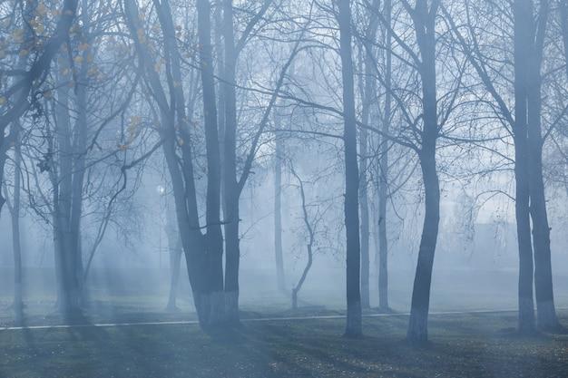 Осенний парк с мистическим туманом