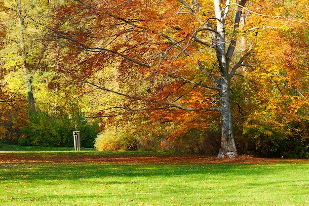 Осенний парк с деревьями над водами озера