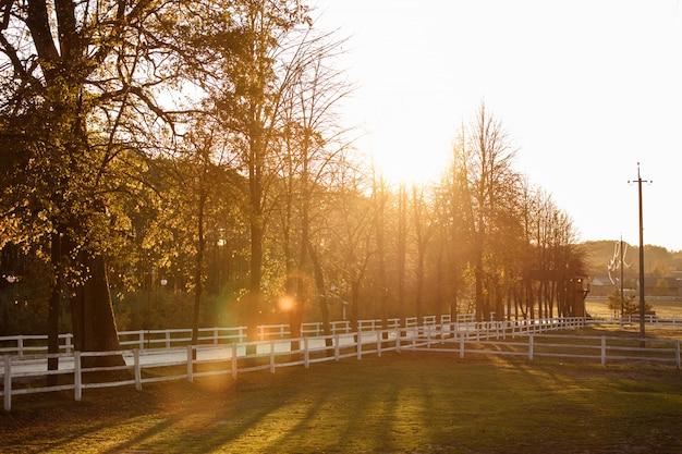 日光と白い木製のフェンスと秋の公園