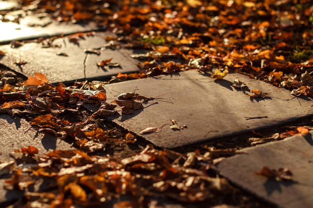 Autumn path of tiles in the park