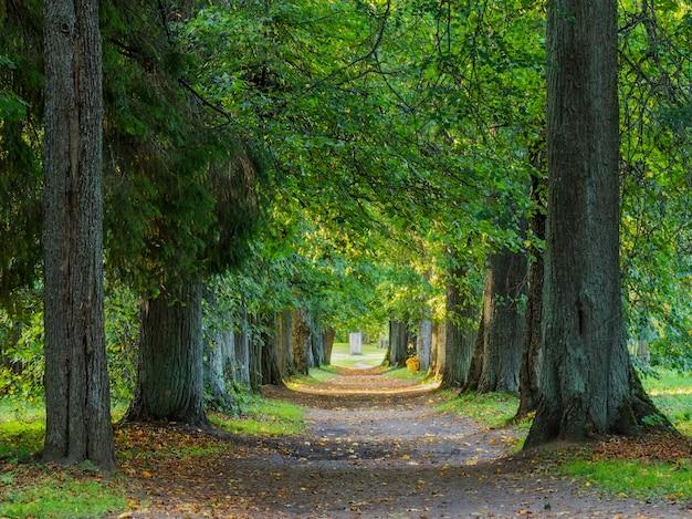 Осенние дорожки в лесу. вечернее время