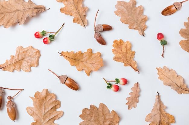 Осенняя композиция образца. желуди, золотые листья ака и красные ягоды на белом фоне. осенний элемент дизайна картины. плоская планировка, вид сверху, копия пространства.