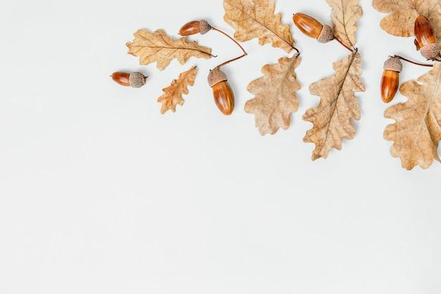 Осенняя композиция образца. желуди, золотые листья ака в форме ветви на фоне. осенний элемент дизайна картины. плоская планировка, вид сверху, копия пространства.