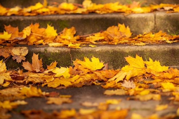 Autumn picture. autumn. the steps are covered with bright fallen leaves, close-up. wallpaper