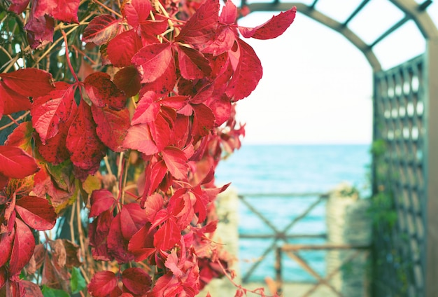 Autumn plant red foliage natural park on the beach beautiful autumn landscape