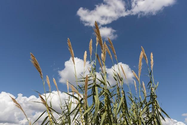 秋の植物と曇り空の背景