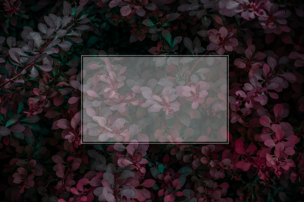 Autumn plants background with frame