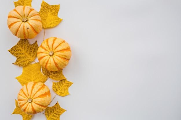 Autumn pumpkin and fall leaves