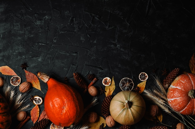 Autumn pumpkins, dried flowers, condiments and cones on a black background.