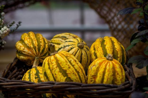 Осенние тыквы в корзине