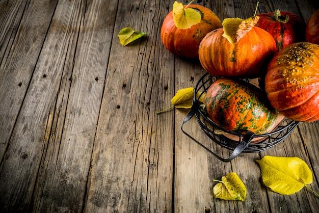 Autumn pumpkins in a table