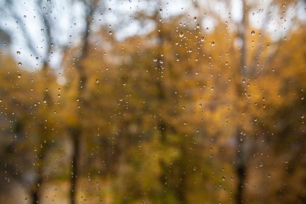 秋。黄色の葉と窓からすに雨の滴