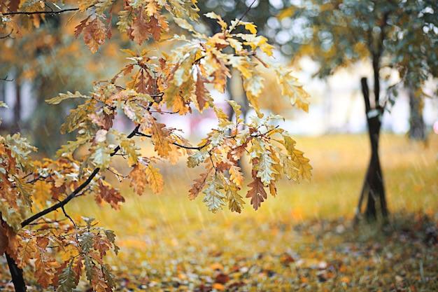 Осенний дождь в парке днем
