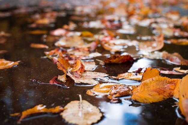 通りの水たまりに紅葉と黄色の葉