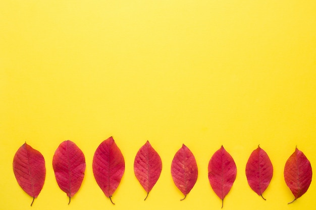 Autumn red leaves on bright yellow background