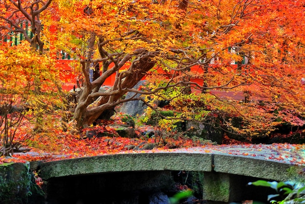 Autumn red maple leaves tree in japanese temple garden