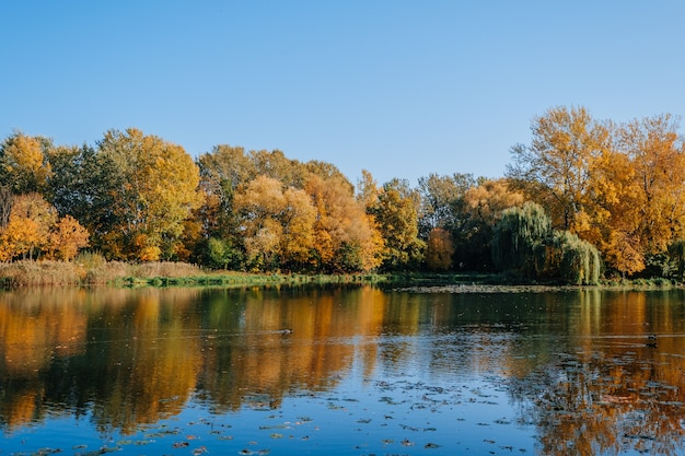Autumn river bank with colorful trees