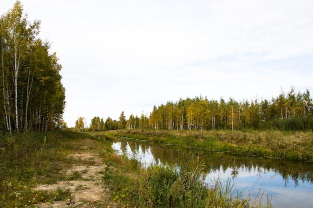 Осенняя река в осоке и аире. расслабление и релаксация на пляже.
