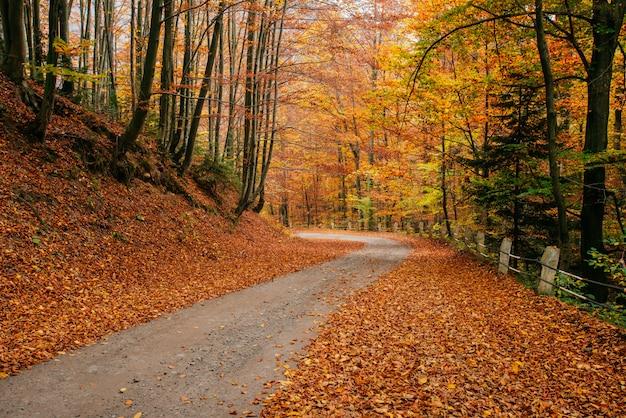 Autumn road landscape