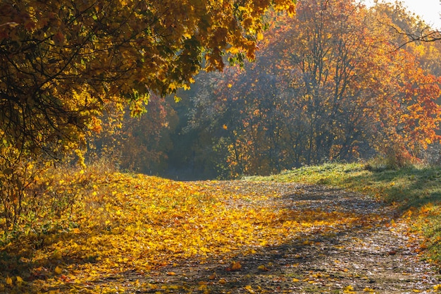 Autumn road in the park. sunny natural landscape.