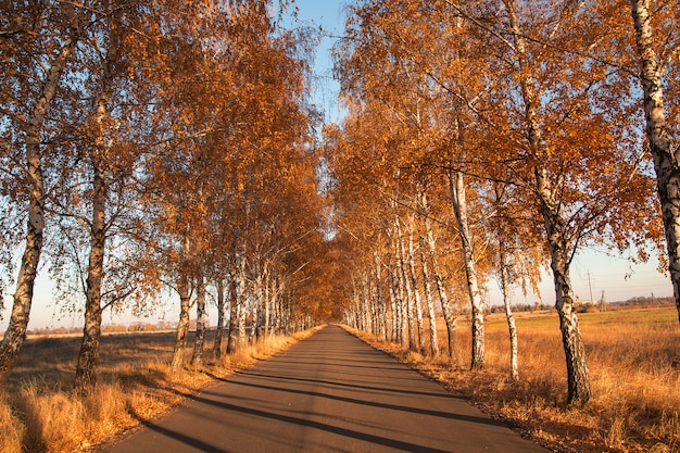Autumn. road with birches empty gravel country road during the fall foliage season