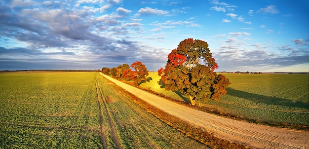 秋の田舎のパノラマ秋の色美しい木々未舗装道路農地晴れた朝