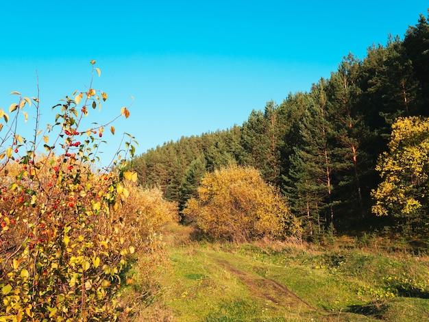 Autumn rural road landscape. autumn forest path through the field