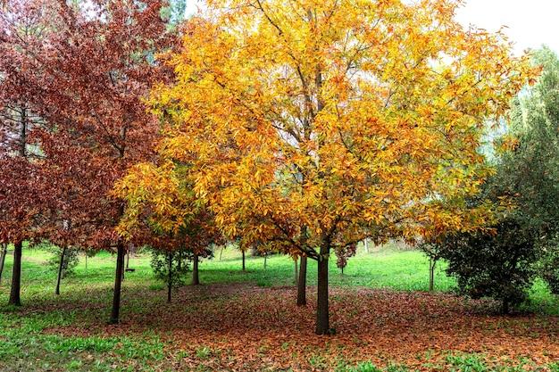 가을 장면. 가을. 태양 ligh에 나무와 잎
