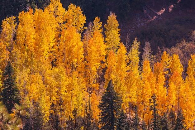 노란색 톤의 가을 장면. 가을 배경.
