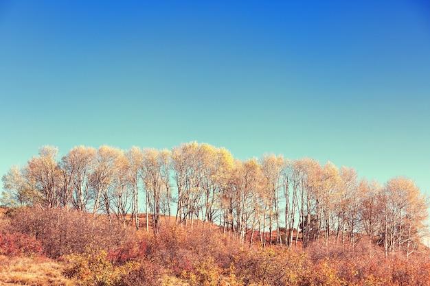 黄色がかった秋のシーン。秋の背景。