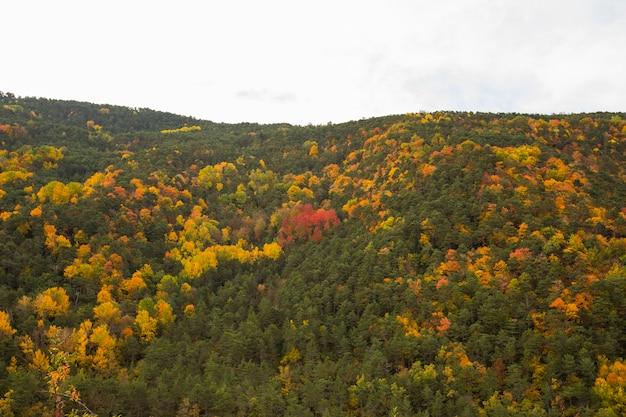 Autumn scene in ordesa and monte perdido national park, spain
