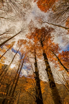 Autumn scene in ordesa and monte perdido national park, spain