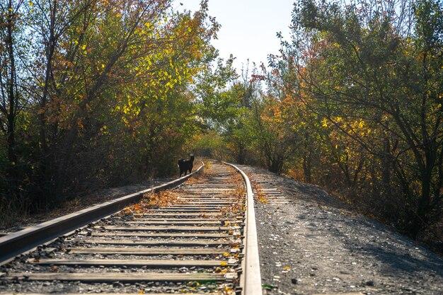 古いさびた鉄道と秋のシーン