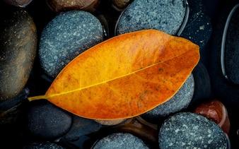 Autumn season and peaceful concepts. Orange leaf on river stone .