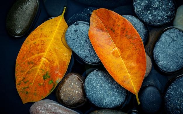 秋の季節と平和なコンセプト。川の石の上にオレンジの葉。