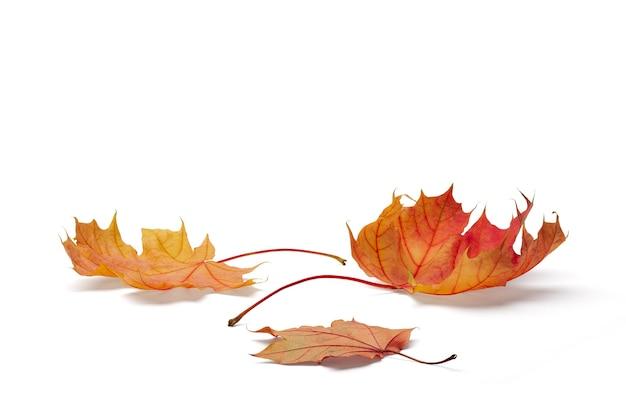 Концепция осеннего сезона, кленовый лист, изолированные на белом фоне