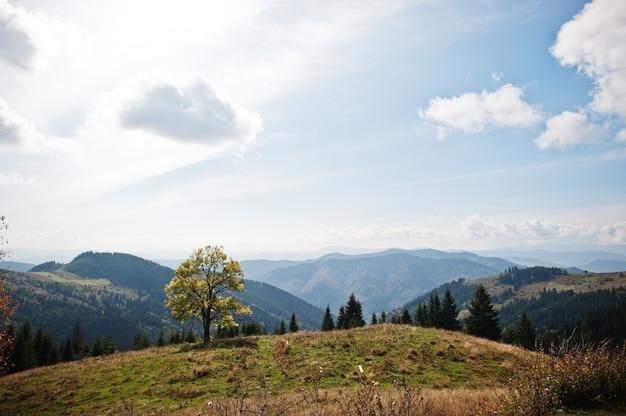 산에서가 시즌입니다. 혼자 나무입니다. 카르파티아, 우크라이나. 장엄한 전망.