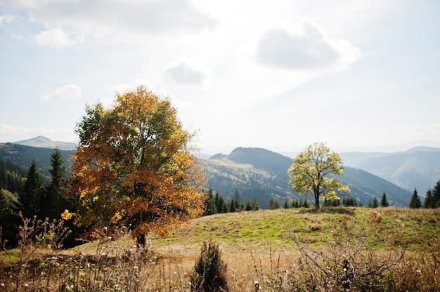 산에서가 시즌입니다. 카르파티아, 우크라이나. 장엄한 전망.