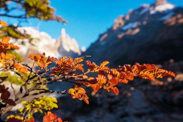 Осенний сезон в горах патагонии, южная америка, аргентина