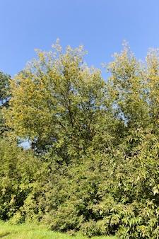 秋の季節の風景