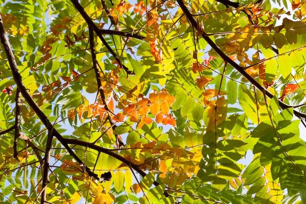 自然の秋の季節
