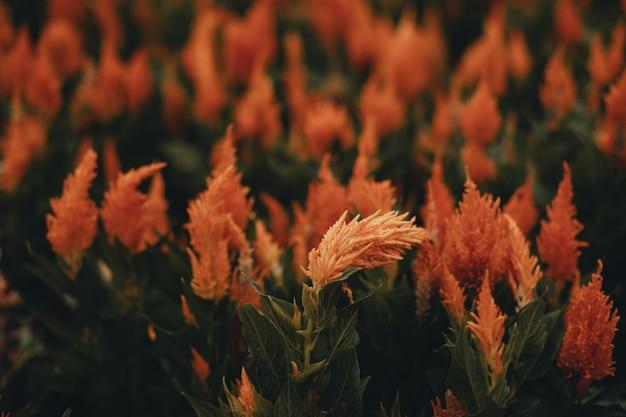 Осенние сезонные экзотические оранжевые цветы фон для осенних поздравительных открыток, плакатов, календарей