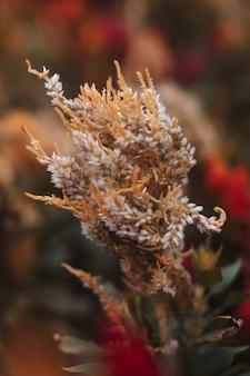 Осенний сезонный экзотический желтый цветок, растущий в саду фон для осенних открыток