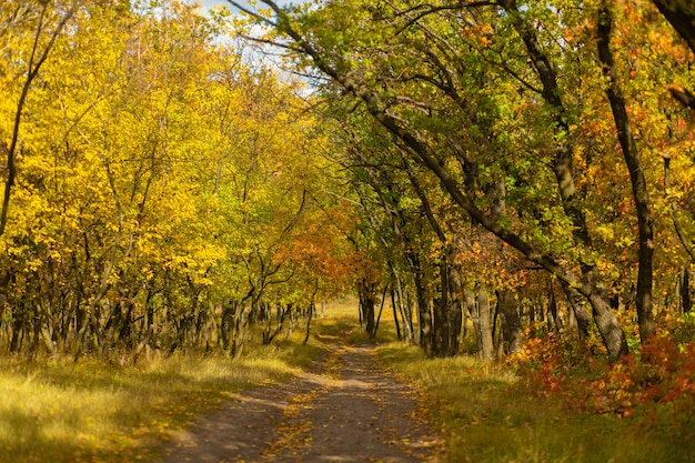 Autumn shades of color. forest in bright autumn colors.