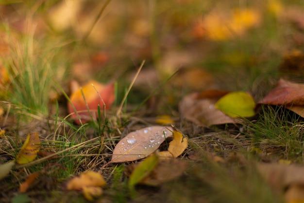 Осенние оттенки цвета. опавшие листья разного цвета на траве в парке.
