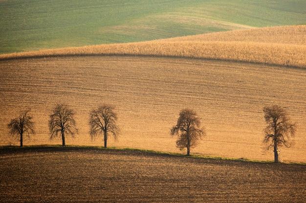 5本の木となだらかな波打つ丘のある秋の南モラヴィアの風景
