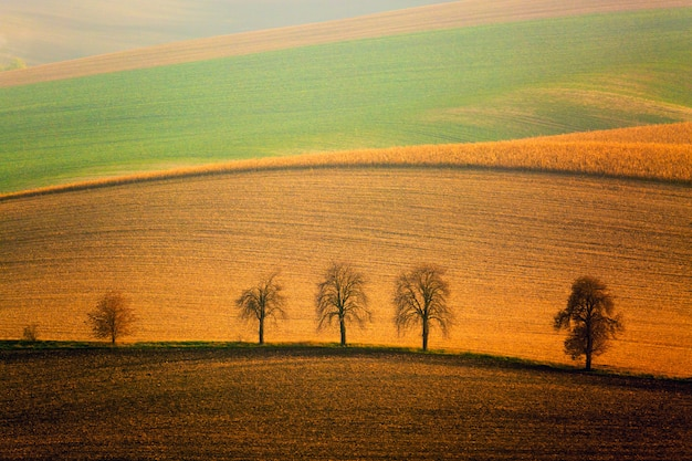 Autumn south moravian landscape with five trees and rolling waving hills