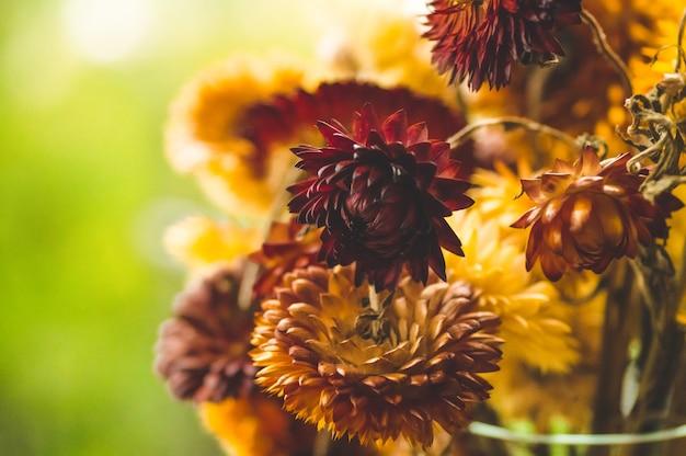 花のある秋の静物。秋の花の居心地の良い花束。